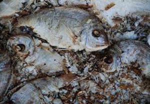 rotting-fish