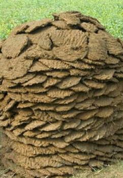 buffalo-manure
